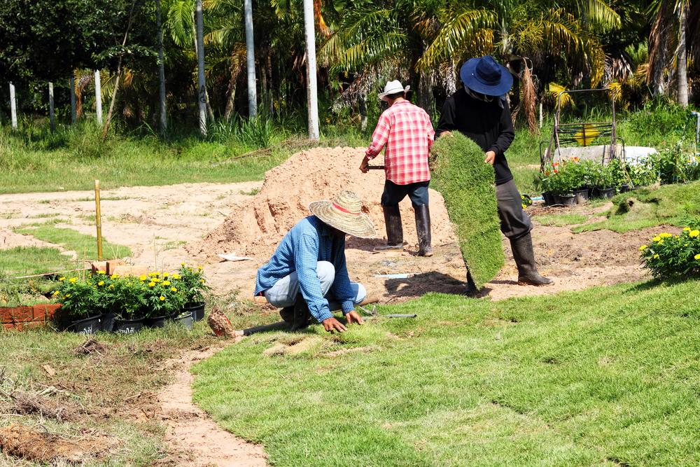 Devis entretien plantations touquin 77131 for Devis entretien jardin
